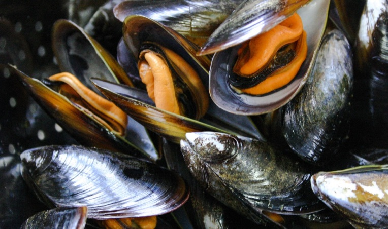 The Good Greeff- With a little white wine, steam your mussels for approx. 8 mins until openl