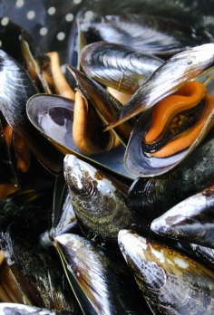 The Good Greeff- With a little white wine, steam your mussels for about 8 minutes until openl