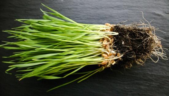 Green juice | Wheat grass