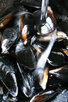 The Good Greeff- Freshly cleaned mussels, scrubbed, soaked and ready to cook