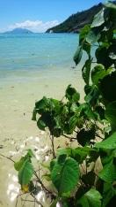 Baie Ternay National Marine Park   Mahe Seychelles