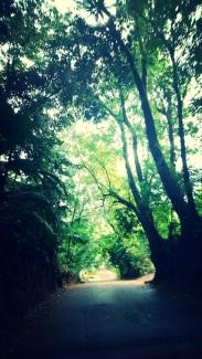 Crossing the island Mahe