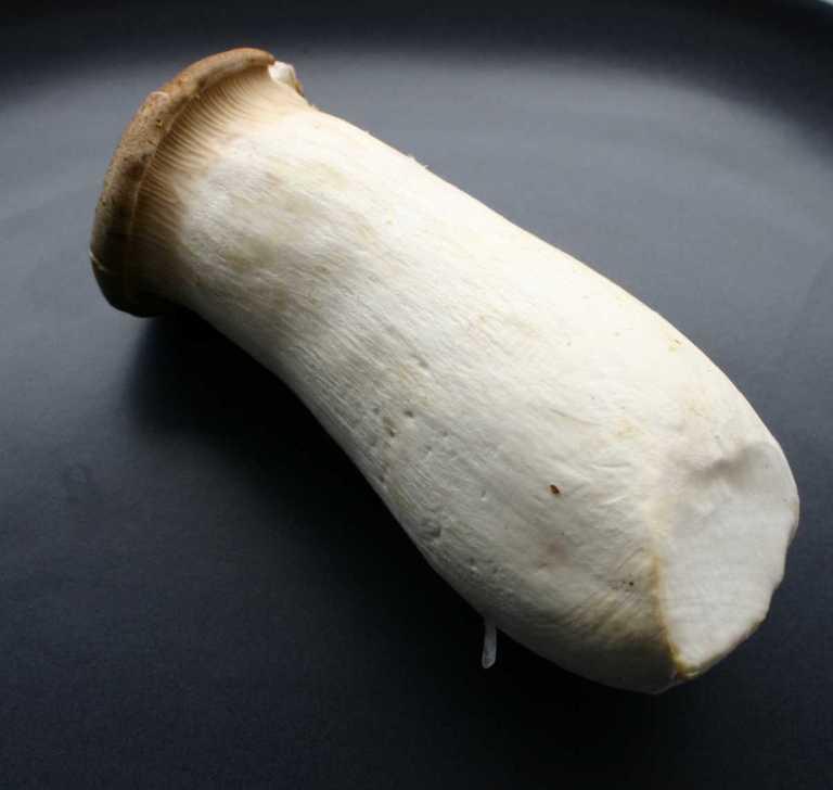king-oyster-mushroom-thegoodgreeff