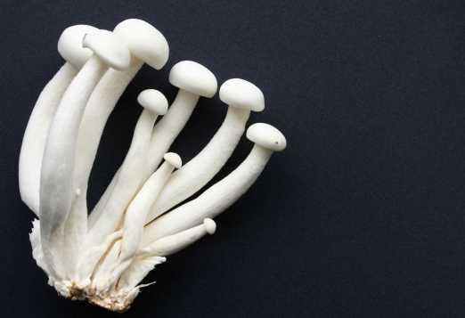 Shimeji mushrooms- white beech